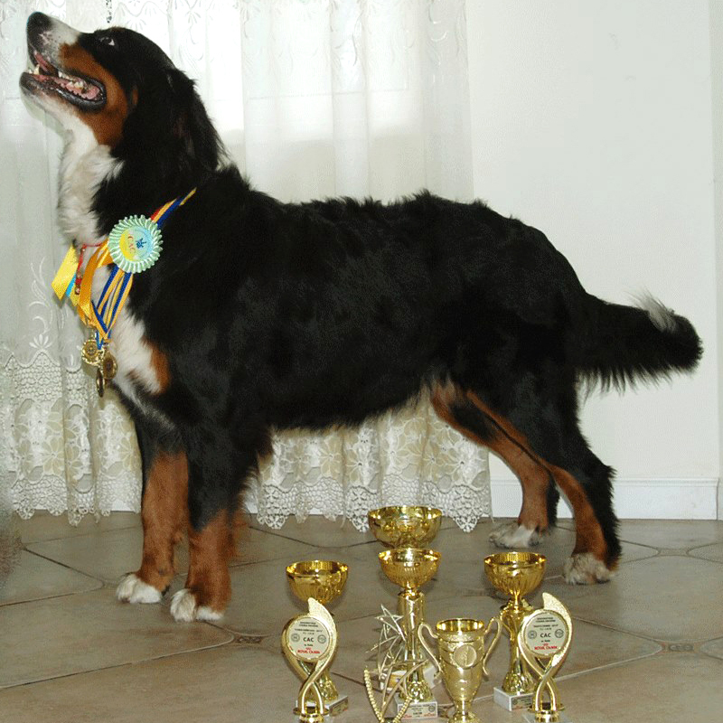 Diva - twice champion of Ukraine